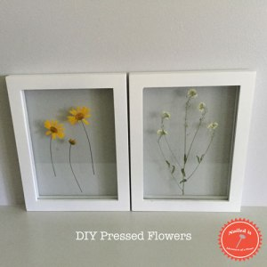 DIY Pressed Flowers by Adventures of a Pinner Blog